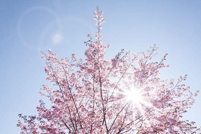 Positive Affirmations_Spring